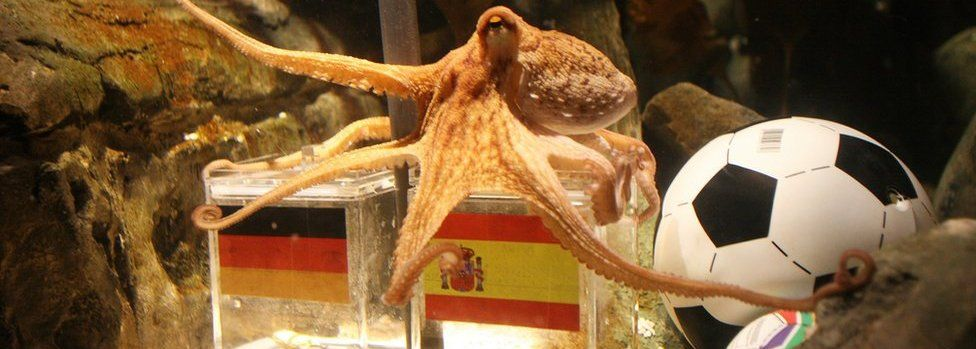 An octopus named Paul sits on a box decorated with a Spanish flag and a shell inside on July 6, 2010 at the Sea Life aquarium in Oberhausen, western Germany.