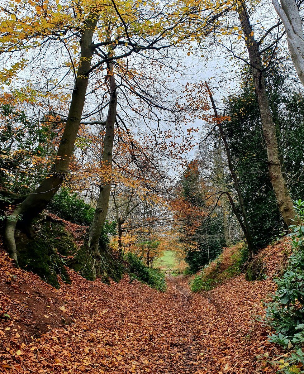 Woodland path covered with leaves