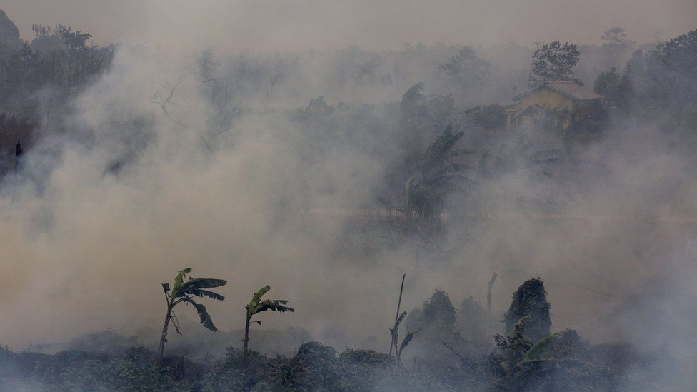 Forest fires burn in Indonesia