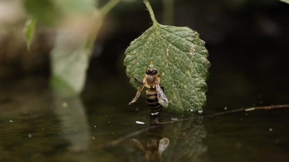 A bee climbs out of water