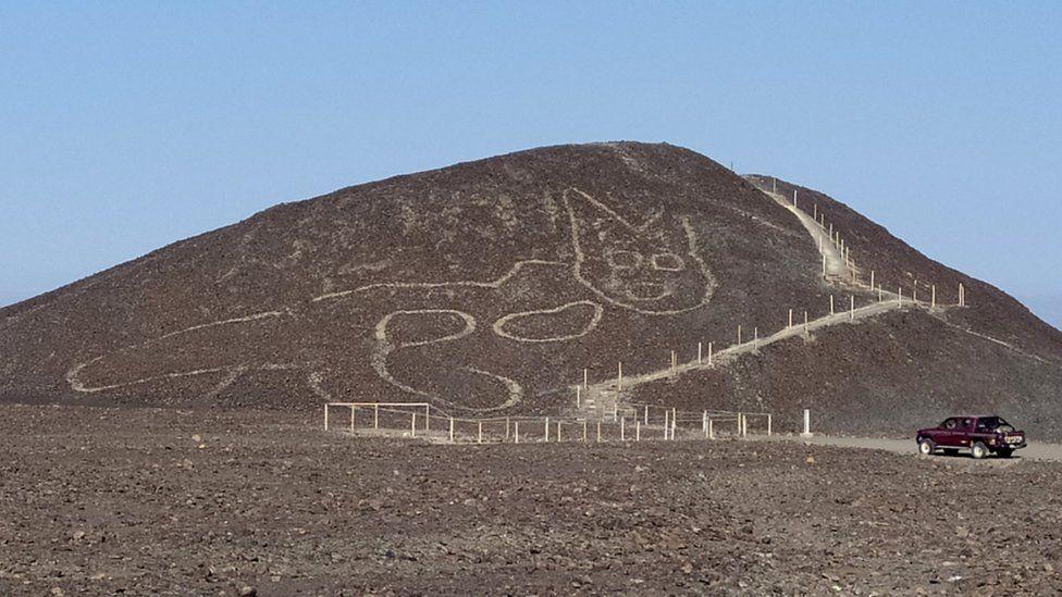 Nazca cat