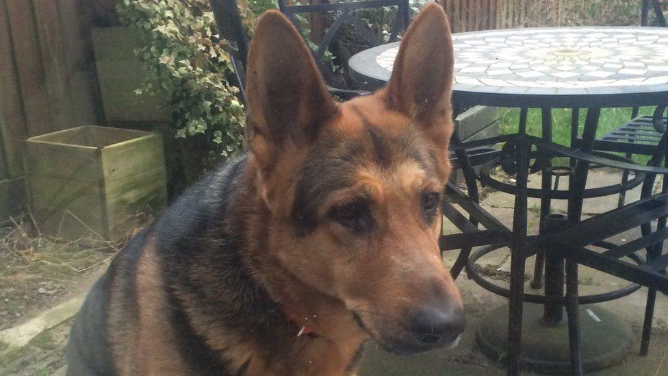 Bruno the German Shepherd
