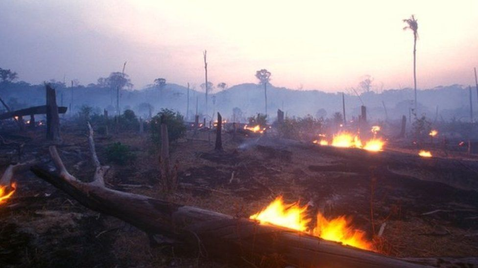 Amazon forest with burning logs