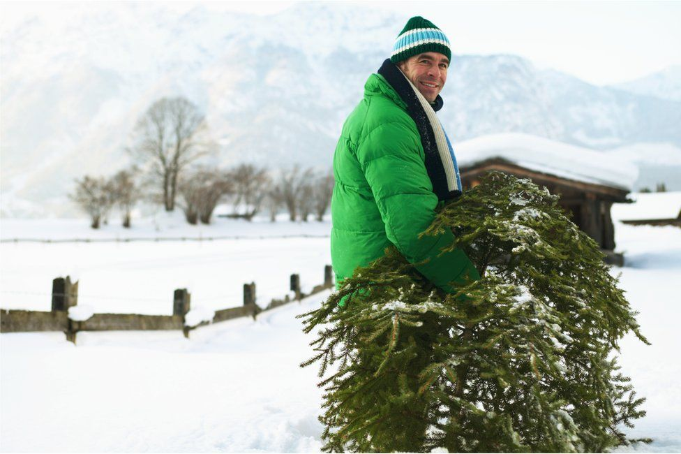 Man carrying a real Christmas tree in the snow