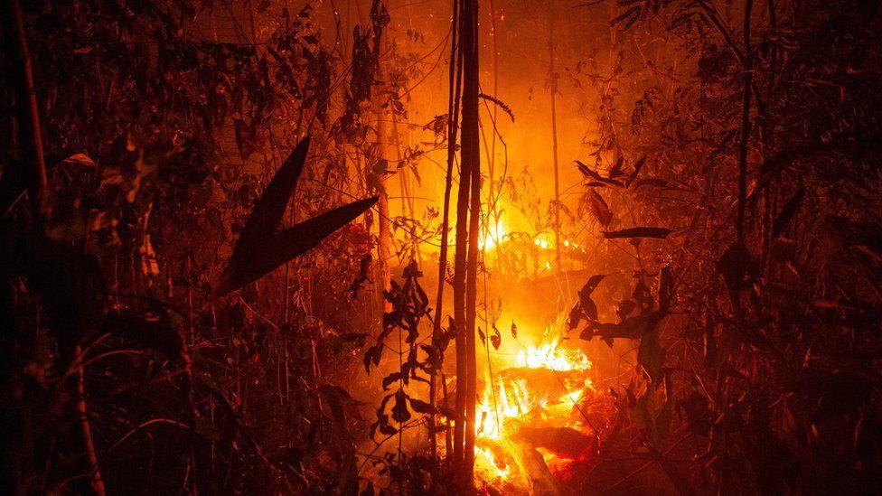 عملية واسعة في البرازيل لمواجهة حرائق غابات الأمازون