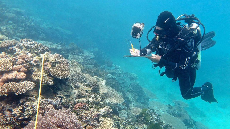 Researcher Grace Frank under the water completing bleaching surveys along a transect line, One Tree Reef, Capricorn Group of Islands, Southern Great Barrier Reef
