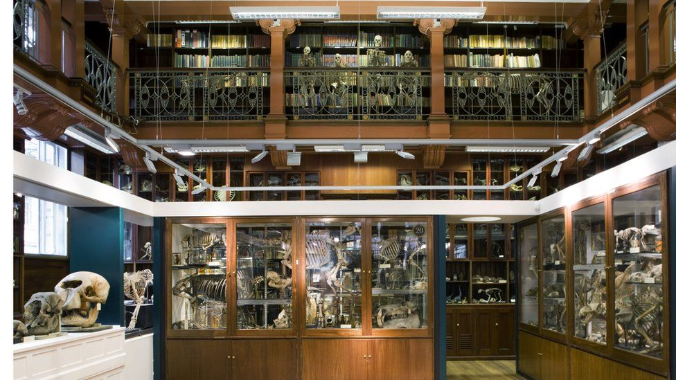 The UCL Grant Museum of Zoology