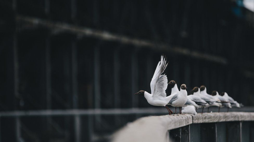 A number of birds sit on a railing at Dunston Staiths