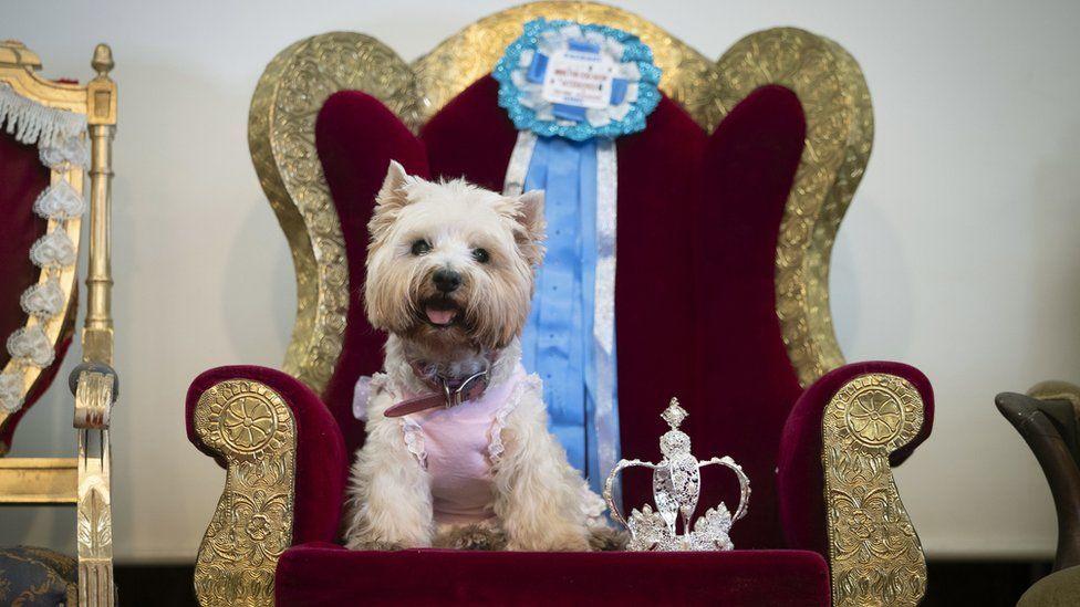 Dog sitting on a makeshift throne
