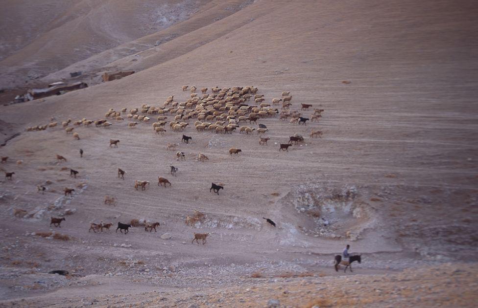 A Bedouin shepherd near Jericho