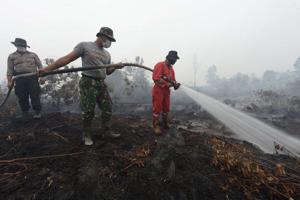 Indonesian firemen put out a fire on peatland in Rimbo Panjang, Riau province on 15 September 2015