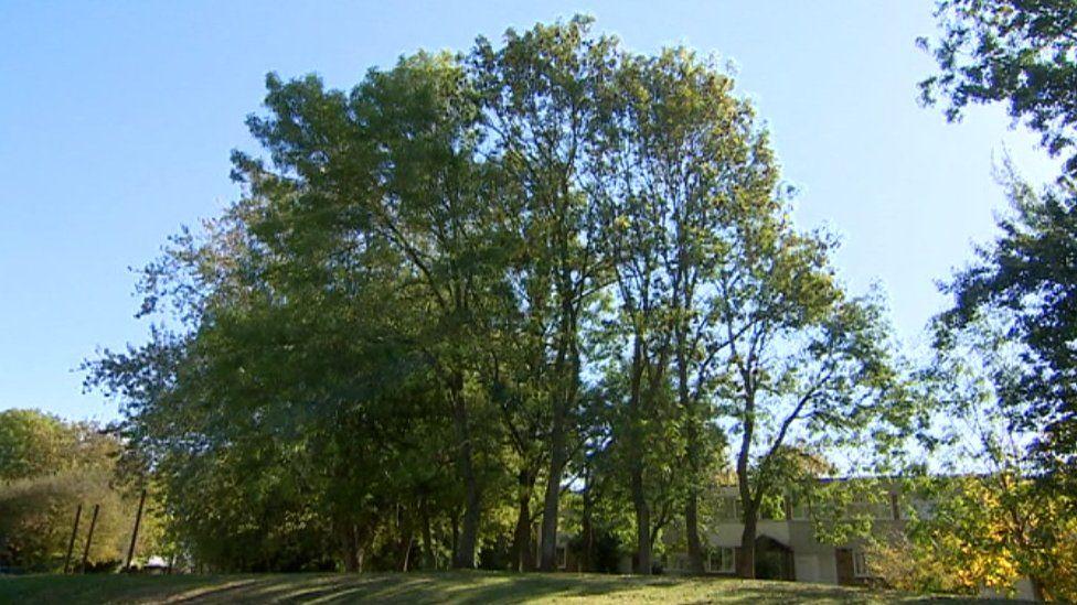 Green space at Serpentine Court