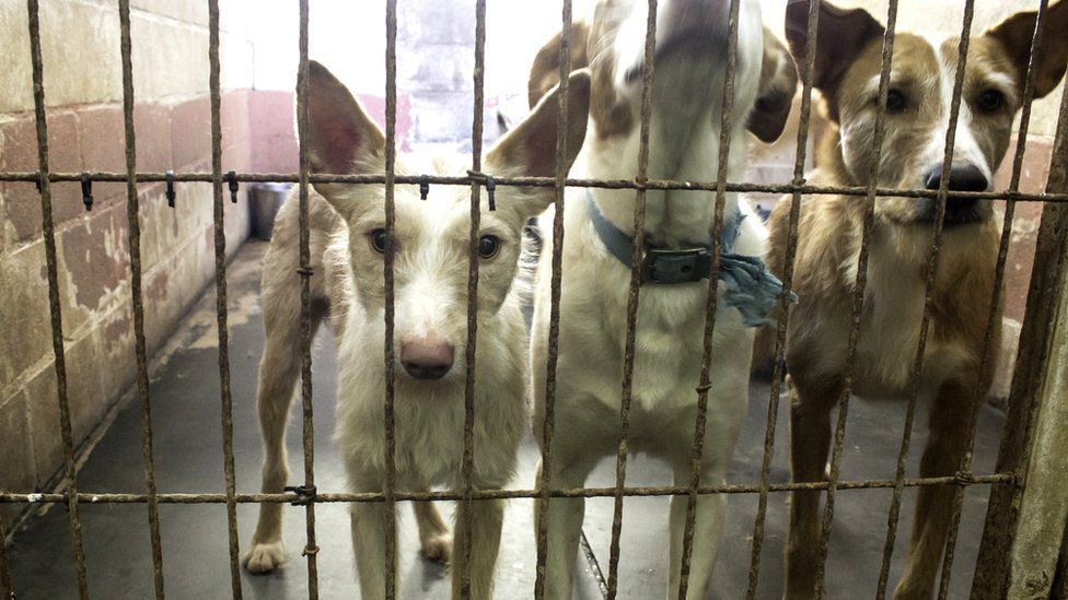 Three dogs behind a fence, seen through bars