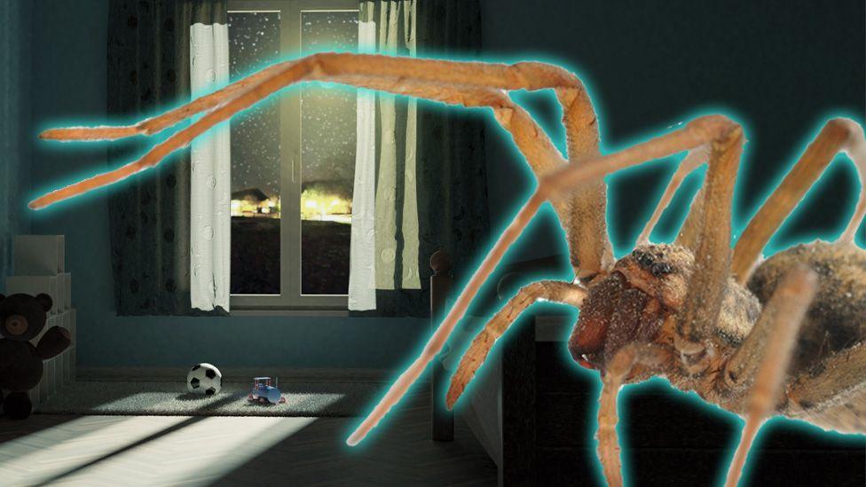 Spider in bedroom