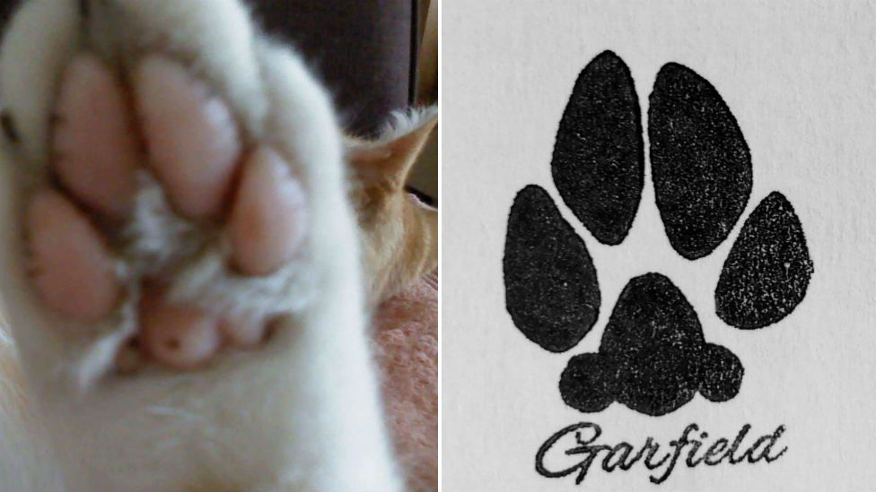 Cat's paw and paw print