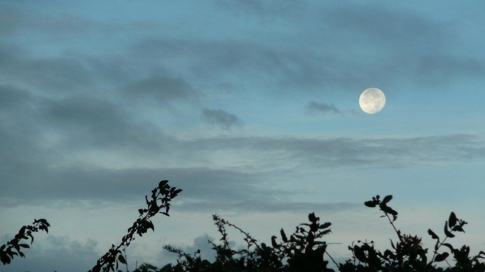 Moon over bushes