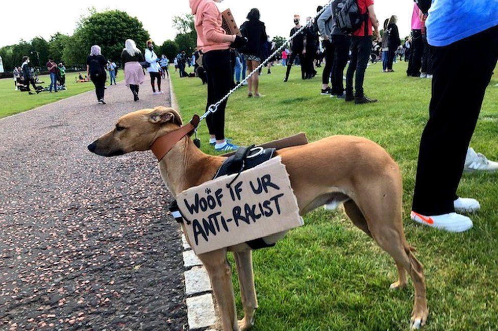 Anti-racist dog in Holyrood park