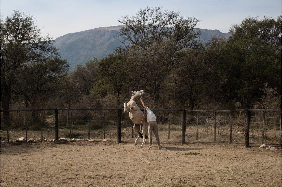 Oscar in the farmyard with a wild horse.
