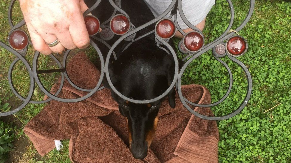 Dog in a wine rack