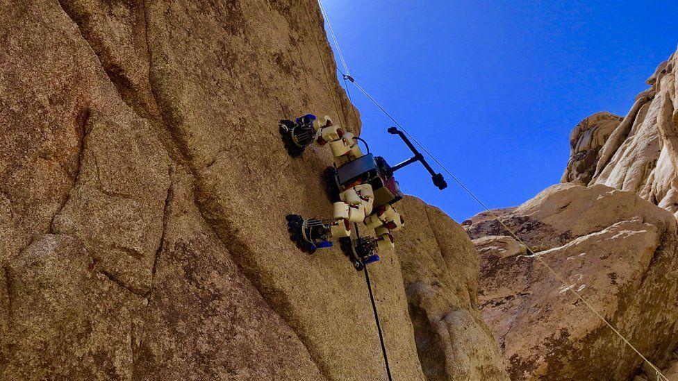 Lemur robot up a cliff
