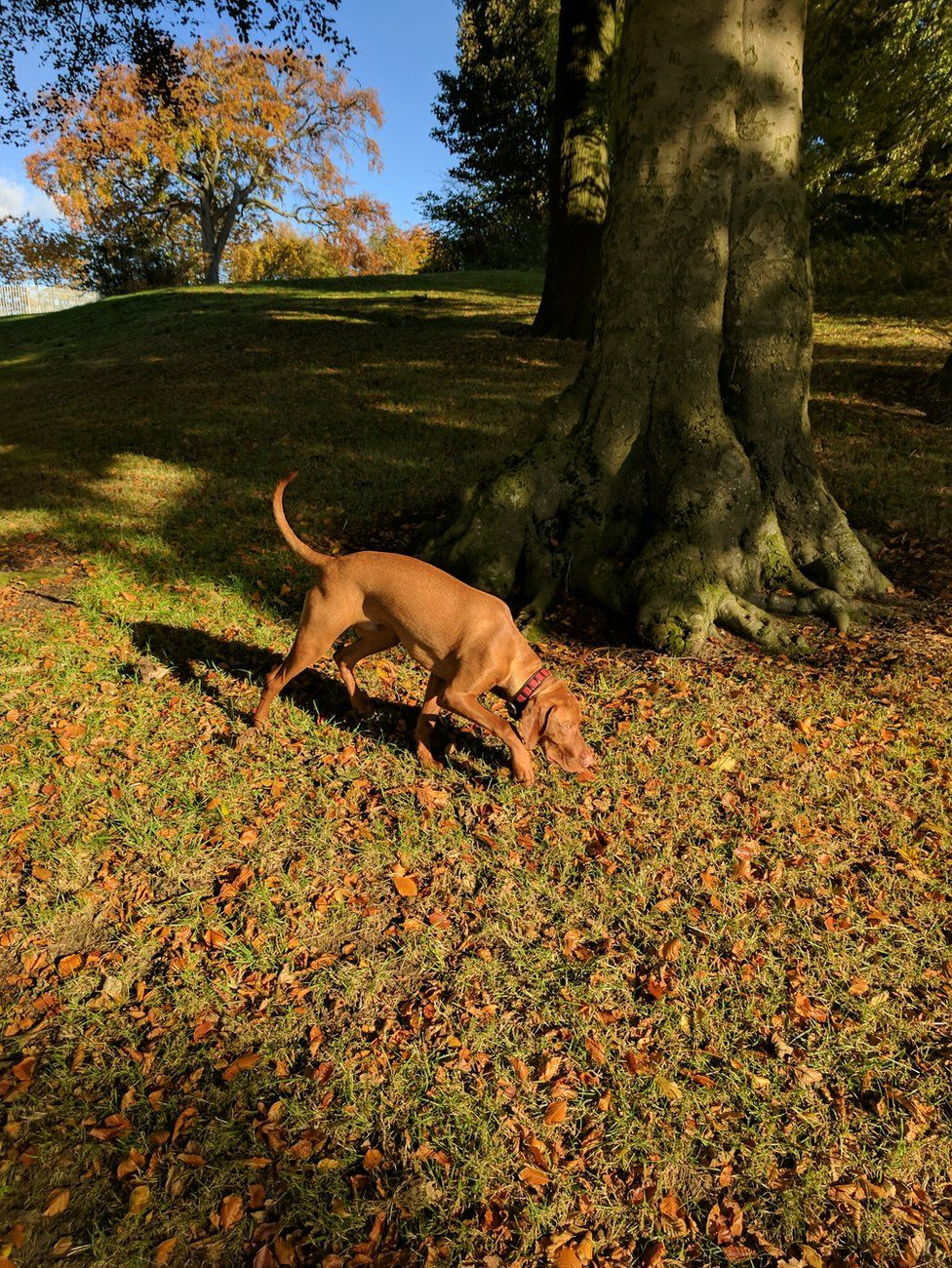 Zak the puppy amongst the leaves