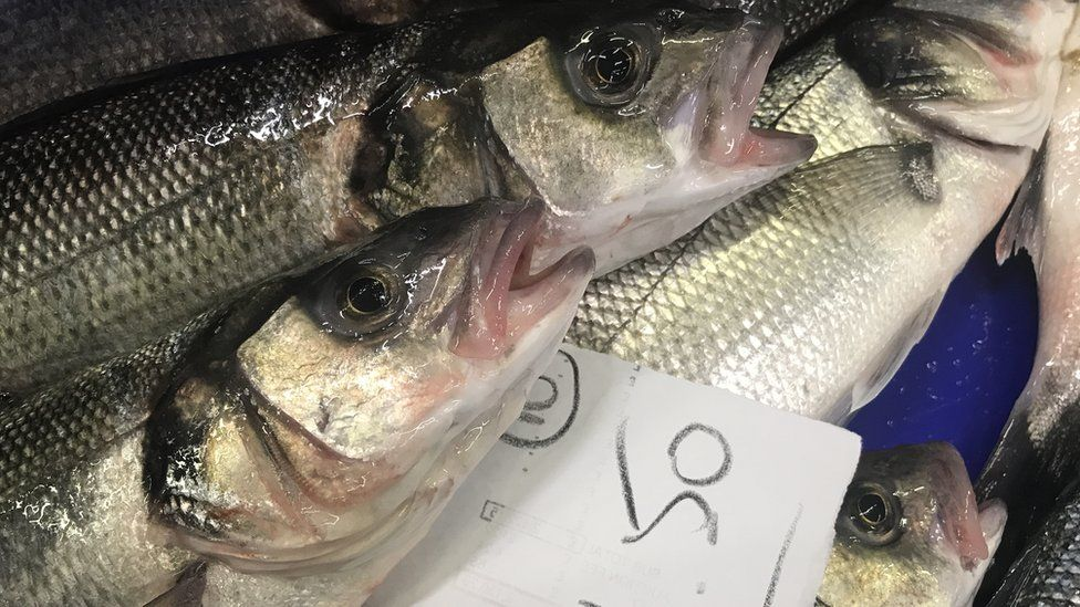 East Anglia: Revived fishing industry 'could create 300 jobs'