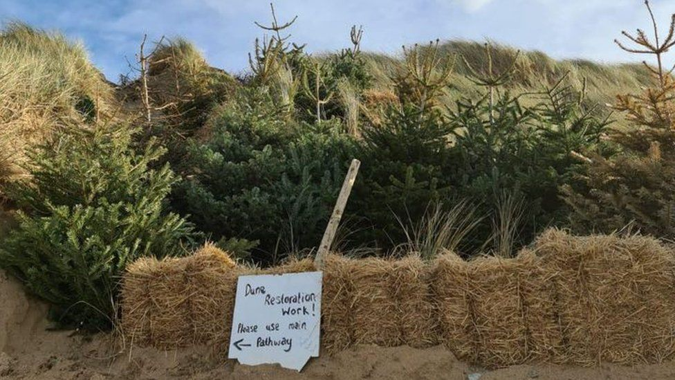 A row of Christmas trees and a wall of hay bales on the sand