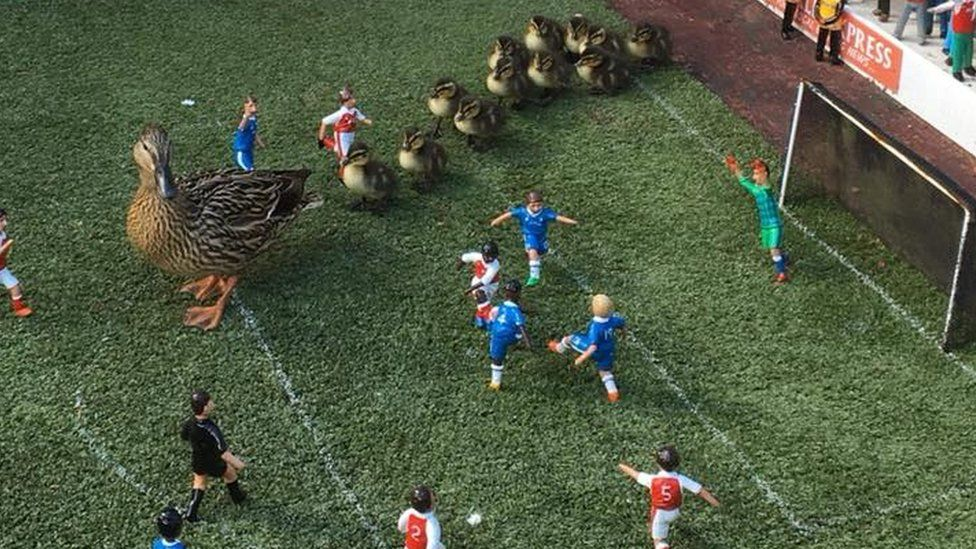 Ducks and ducklings on the model football pitch