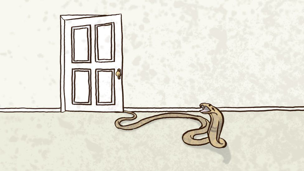 Illustration of a snake creeping out from round a door