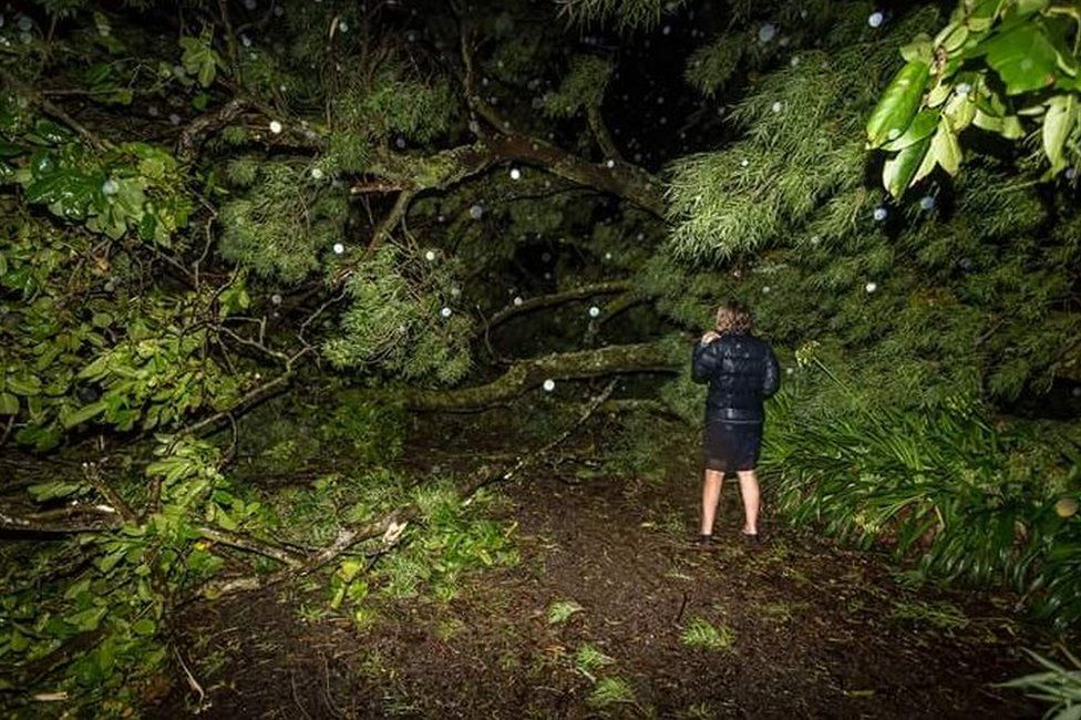 Picture of uprooted tree in Hastings in New Zealand after Cyclone Cook, on 13 April 2017