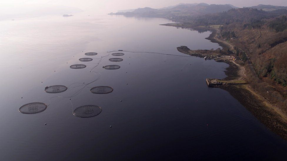 More than 200 fish farms now operate in Scotland
