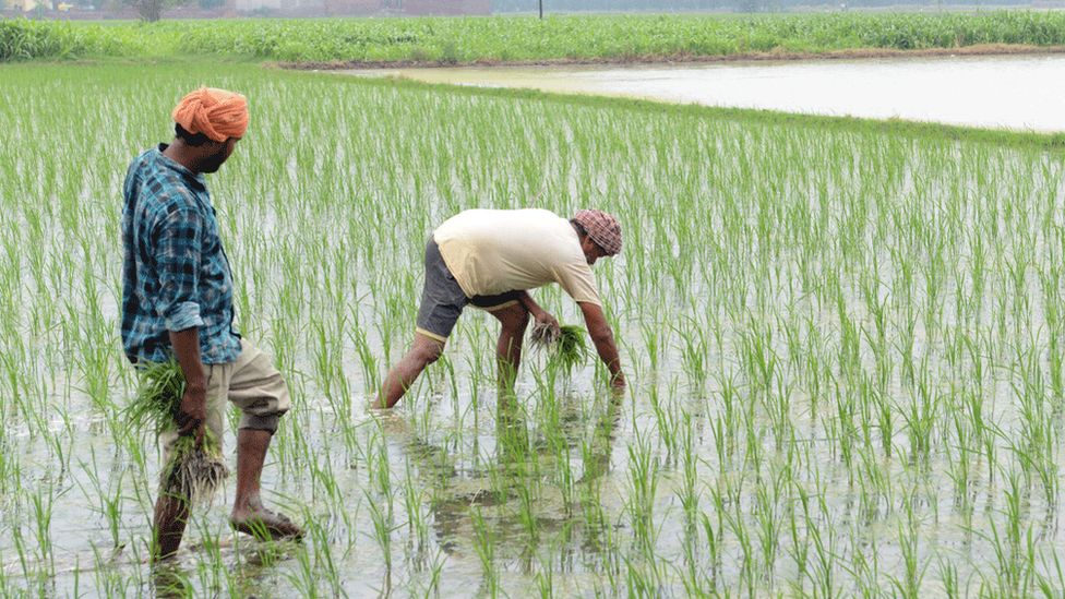 Farmers planting in rural India