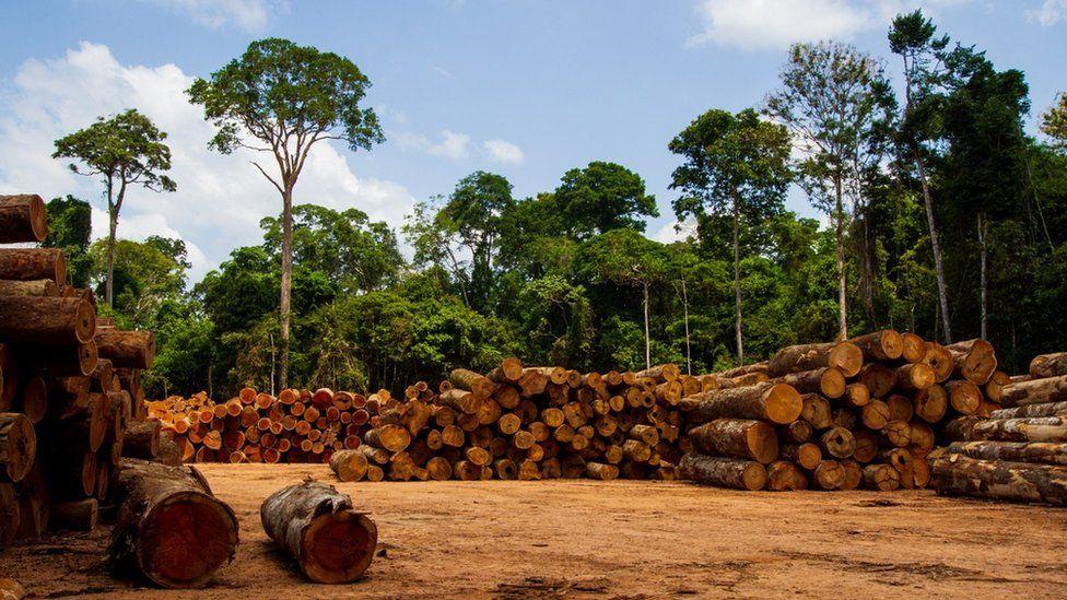 Logs in Amazon