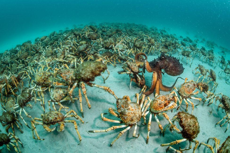 Crab surprise