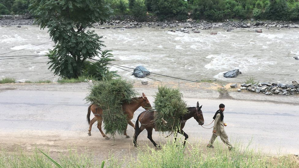 Boy with mules in Neelum Valley