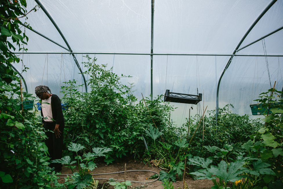 A participant works inside the allotment polytunnel