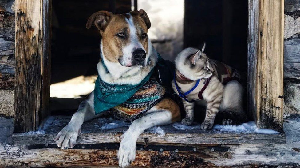 Henry and Baloo: Dog and cat travel companions gain cult