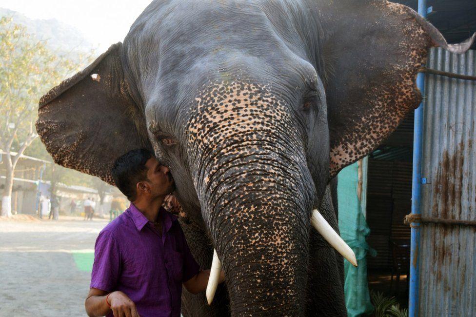 Elephant with caretaker