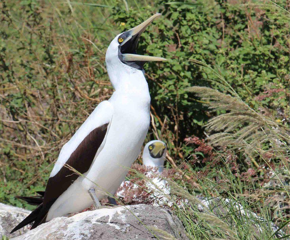 Redonda: The Caribbean island transformed into an eco haven thumbnail