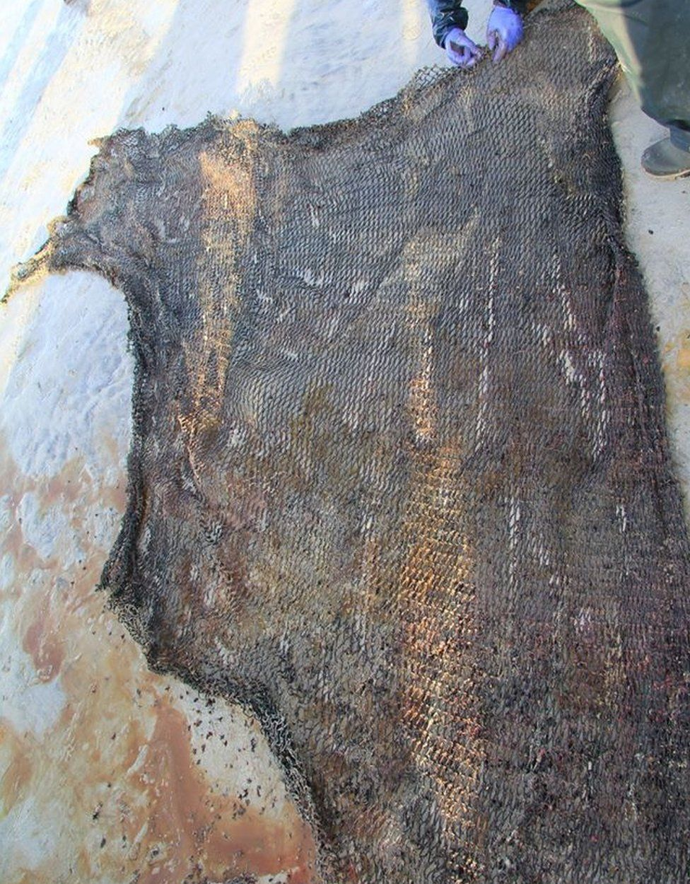 Net from whale's stomach