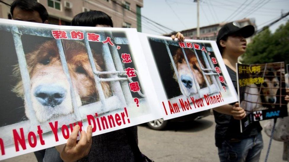 Animal rights advocates hold protest signs outside the Yulin government office in Beijing (10 June 2016)