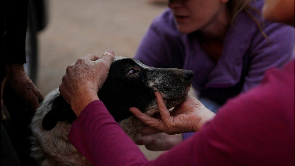 Veterinarian Dawn Alves tends to a dog who received burns on its eyes and chin during the Camp Fire in Paradise