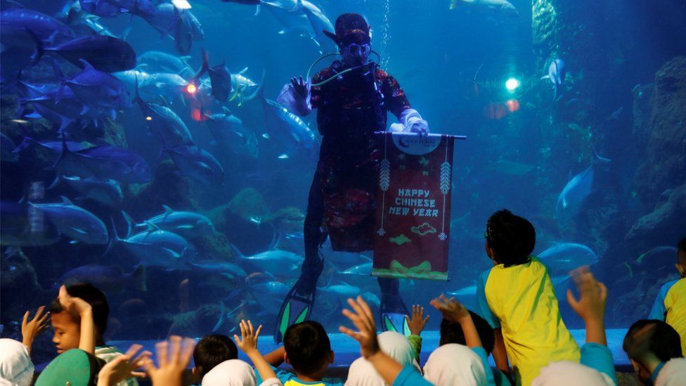 A man waves to children as he dives ahead of the Chinese Lunar New Year at Seaworld Marine Park in Jakarta, Indonesia