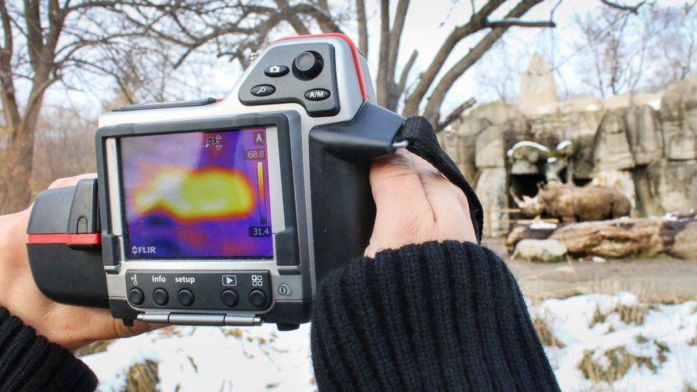 Thermal imaging camera scanning rhino in Detroit Zoo