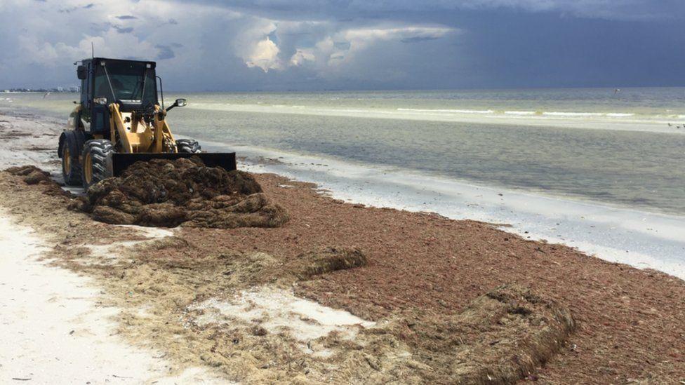 Bulldozer on Fort Myers beach