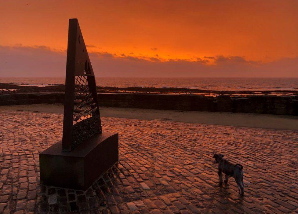 Dog at sunrise