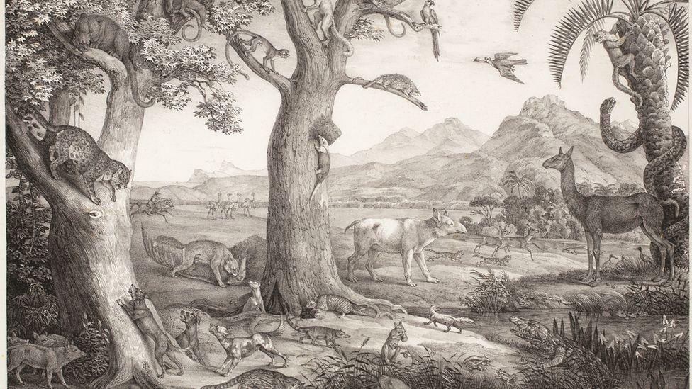 Carl von Martius, o alemão que explorou as entranhas do Brasil e 'batizou' nossa natureza