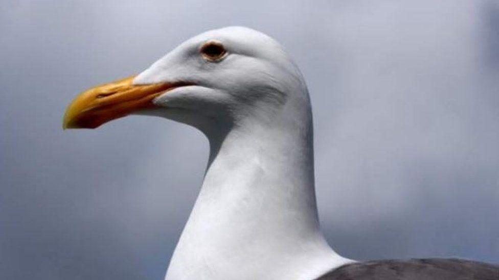Seagull attacks: Man told 'put up umbrella' to avoid birds