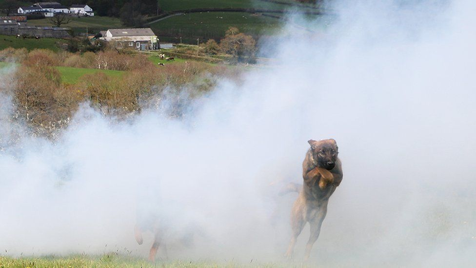 Dogs running through a cloud of smoke