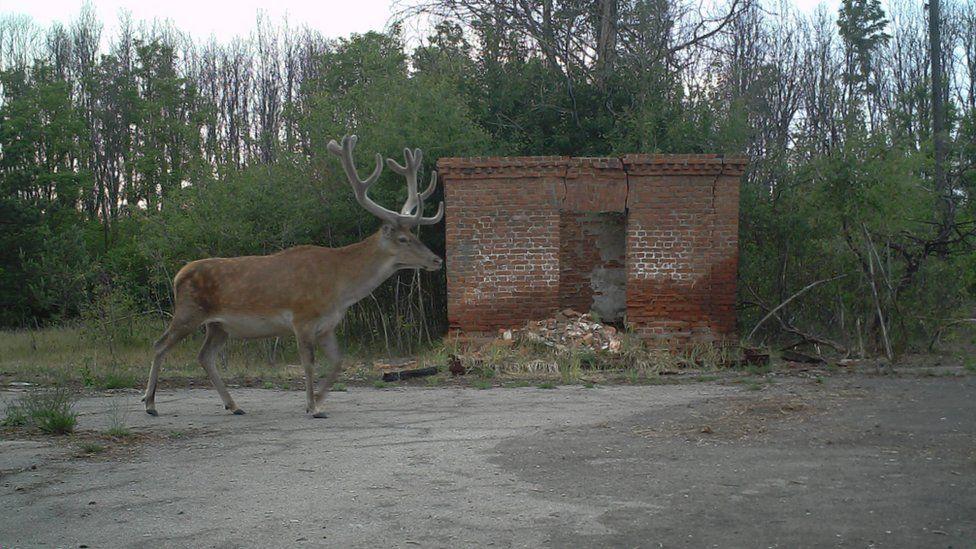 Животные и следы присутствия людей. Фото с сайта ВВС News Украина